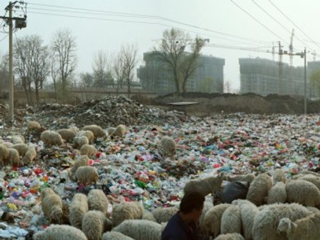 <i>Beijing Besieged By Waste</i> Wins Two Awards
