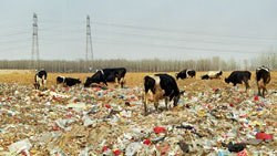 """""""Overwhelming Impact"""": Review of <i>Beijing Besieged by Waste</i>"""