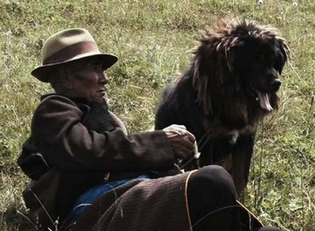 <i>Old Dog</i> a Hit at Brooklyn Film Festival; Screens Next Week at Northside Festival