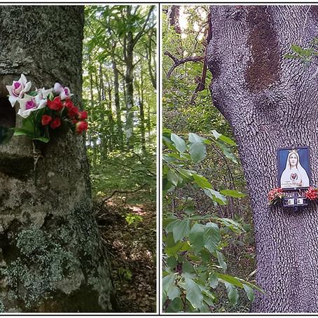 Gli alberi votivi di Capracotta