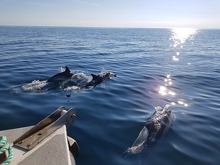 3 dolphons and boat.jpg