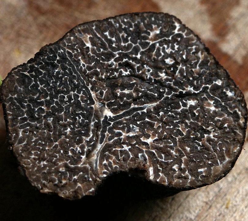 winter-truffle-203032_960_720.webp
