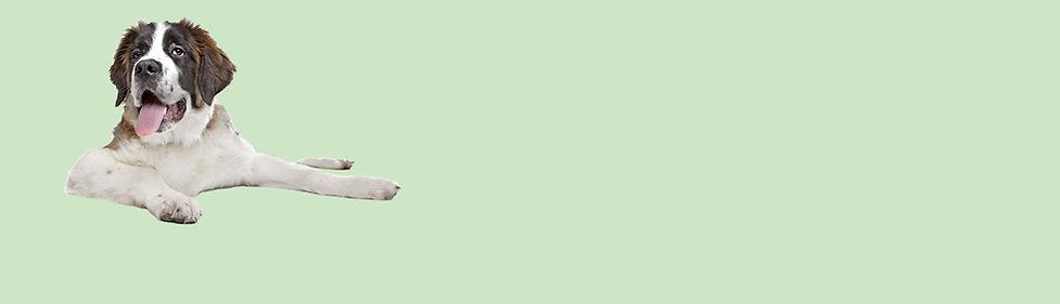 Pets over 125.jpg