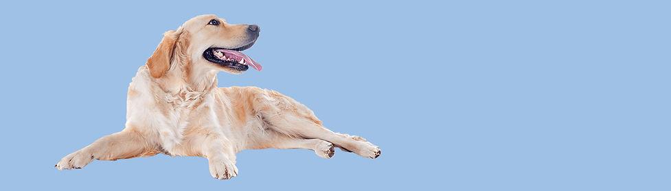 Large Dog.jpg