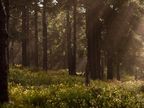 Wenn der Wald ruft...