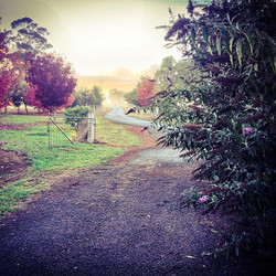 Good morning 🙂_Sunrise over the main driveway at Misty Gully