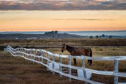 Pasture Sunrise