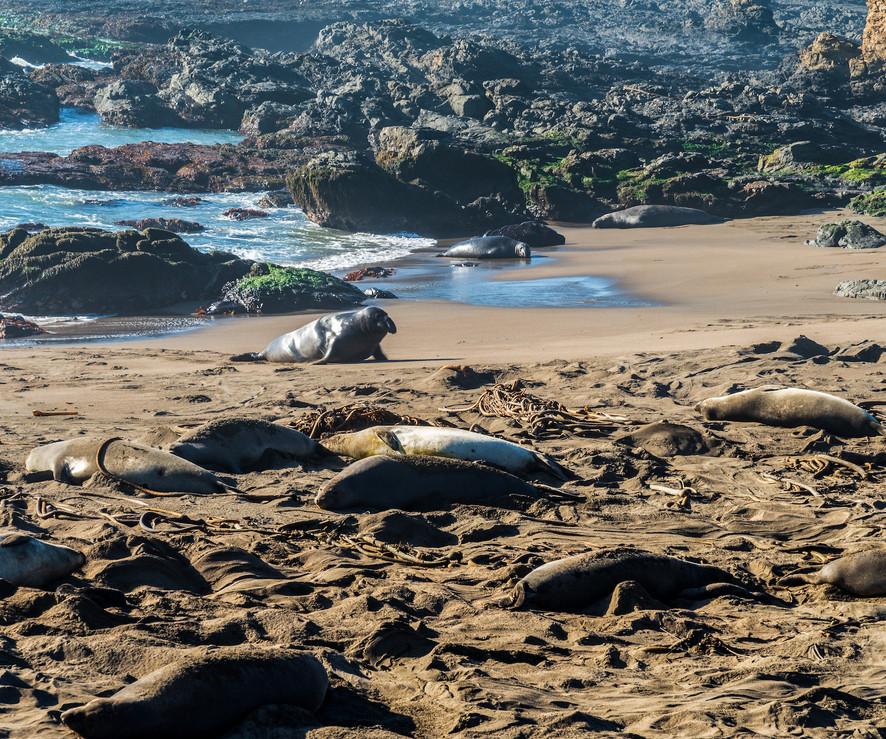 Sea Lions.jpg