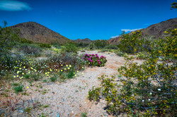 Desert Spring Colors