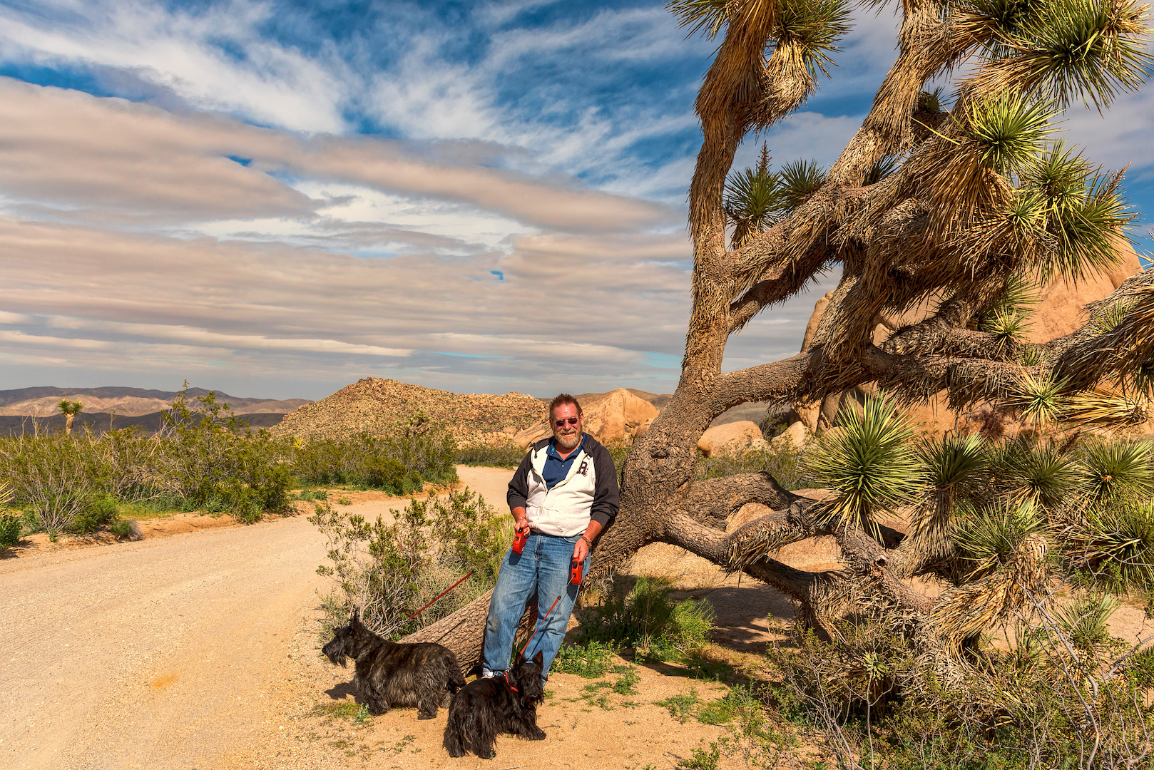 Larry-Dogs At Joshua Tree