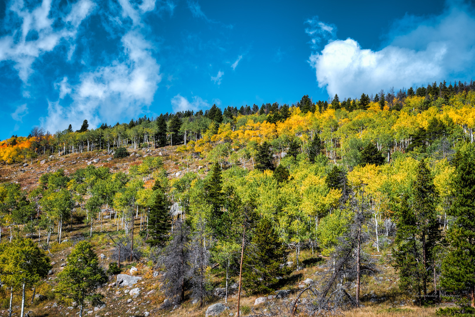 Rocky Mountain Fall Colors