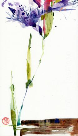 Thursday Bloom 1