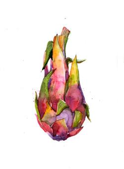 Dragon Fruit 4