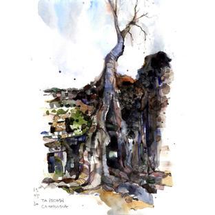 Tree of Ta Prohm, Cambodia