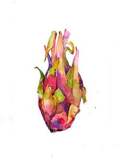 Dragon Fruit 3