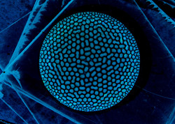 vert-lit-light-blue-001