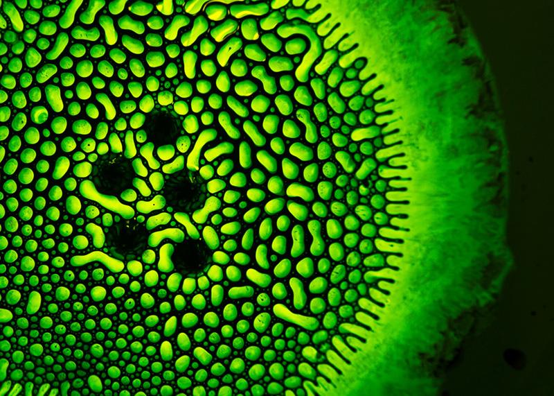 vert-yellow-green-003-5x7
