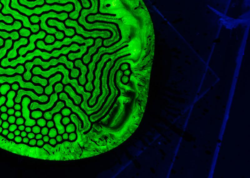 vert-neon-green3-002