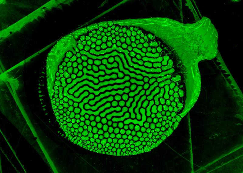 vert-lit-green-001