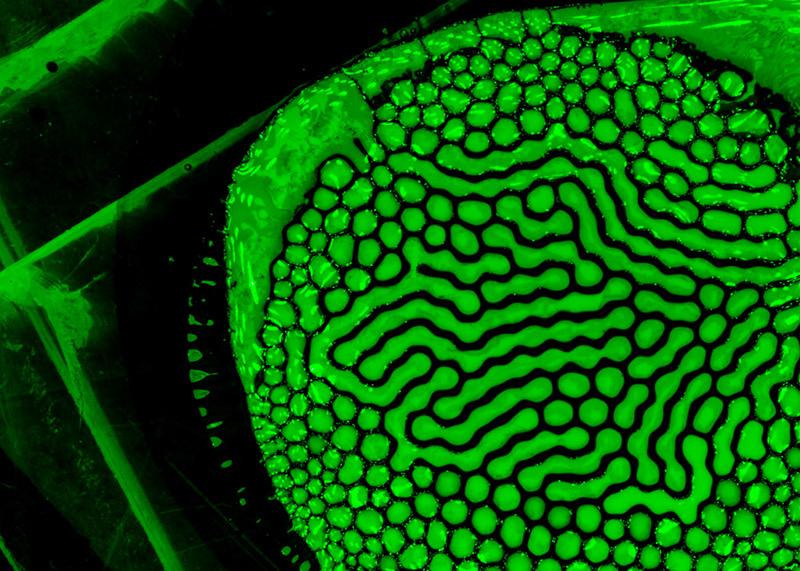 vert-lit-green-004