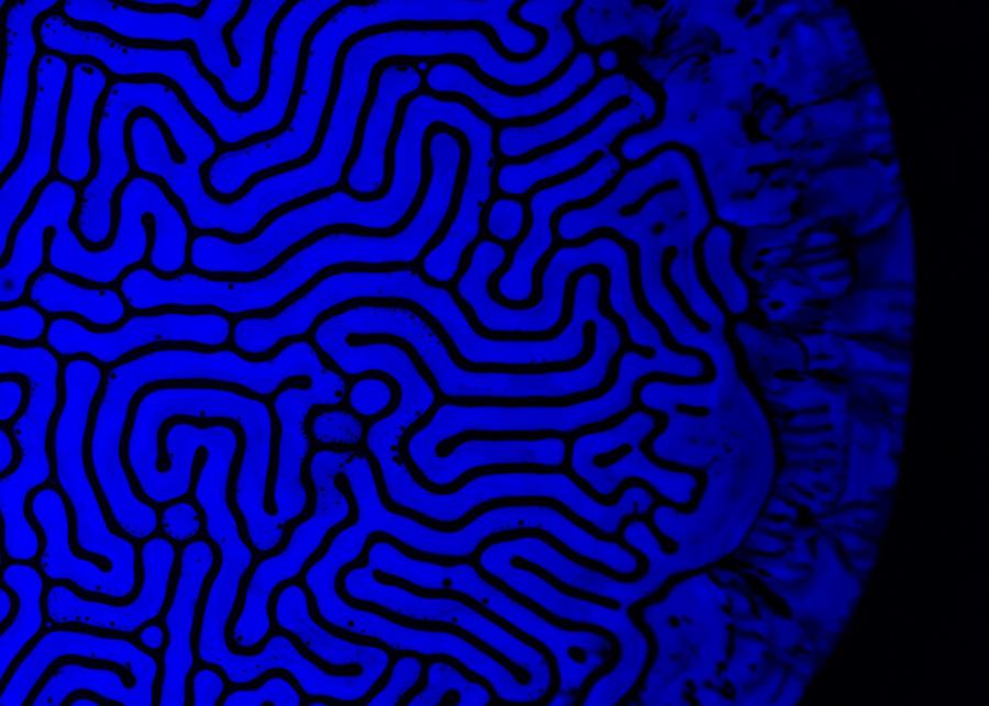 ferro-neon-blue1-008