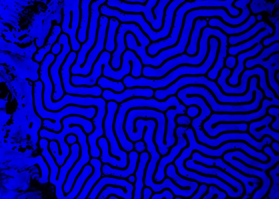 ferro-neon-blue1-004
