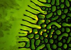 vert-yellow-green3-003-5x7