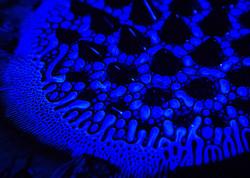 ferro-spikes-blue003
