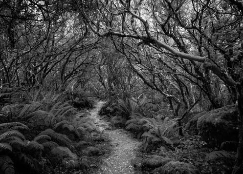 Fuchsia Forest