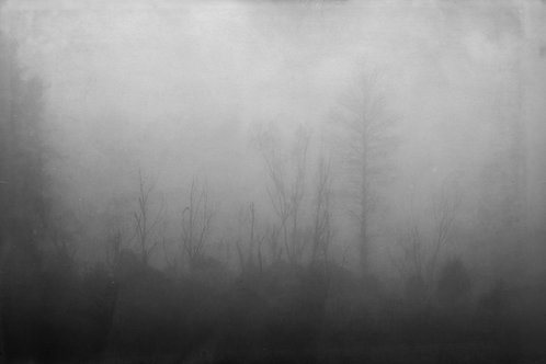 Turitea Fog Fine Art Print