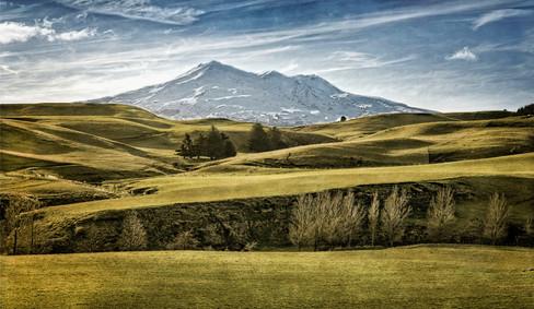 NZIPP IRIS Awards, Bronze, Landscape 2014