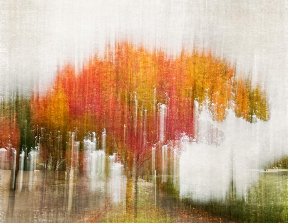 Autumn on Manawaroa