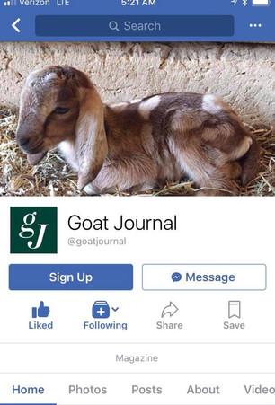 Bambi Goat Journal.jpg