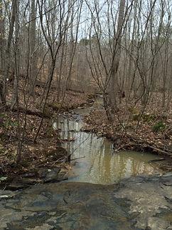 Creek (2).jpg