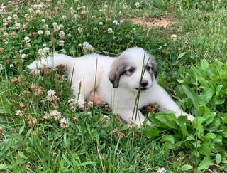 LDG Pup 6.jpg