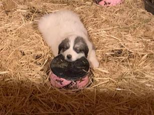 LDG Pup 5.jpg