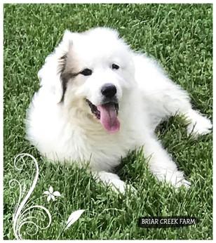 LDG Pup 3.jpg