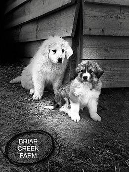 Max and Brandi 2.jpg