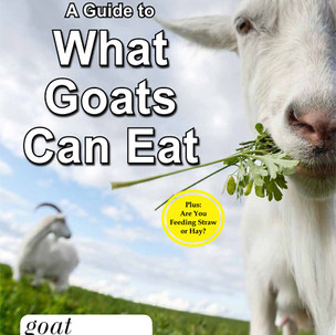 GUIDE TO WHAT GOATS CAN EAT