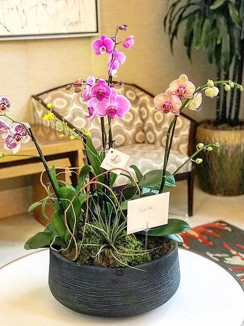 Trio Orchid