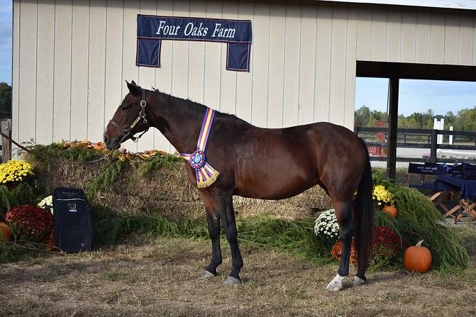 20 High Point Pony.JPG