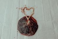 Britt Nash Placenta-4931.jpg