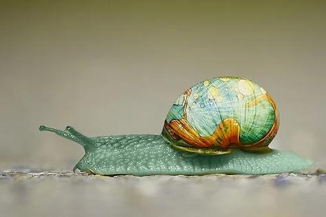 snail-2013317__340.webp