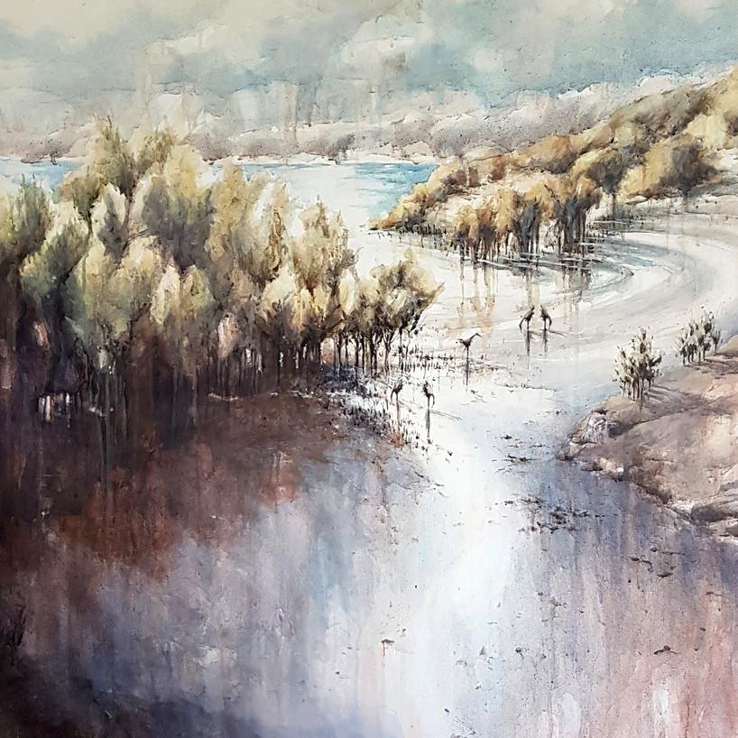 Estuary Mangroves