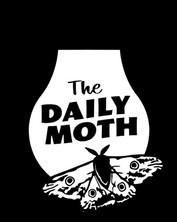 dailymoth_edited.png