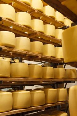 queijos tania