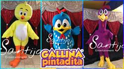 Gallinita Pintadita