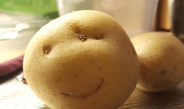 😂🙏💖_This is REAL folks!!!! No photoshop or whatsoever 🤣😍 #happy #potato #vegan