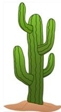 Toten Cactus em PS