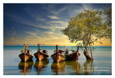 Long-tail boats moored against a mangrove